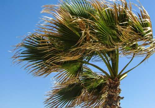 Florida Keys Home Inspecting