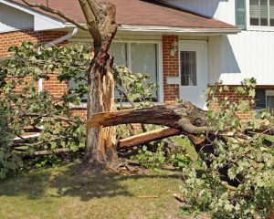 protect your home from wind damage by maintaining trees on the property